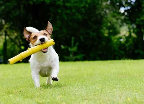 Create The Best Lawn For You And Your Dog