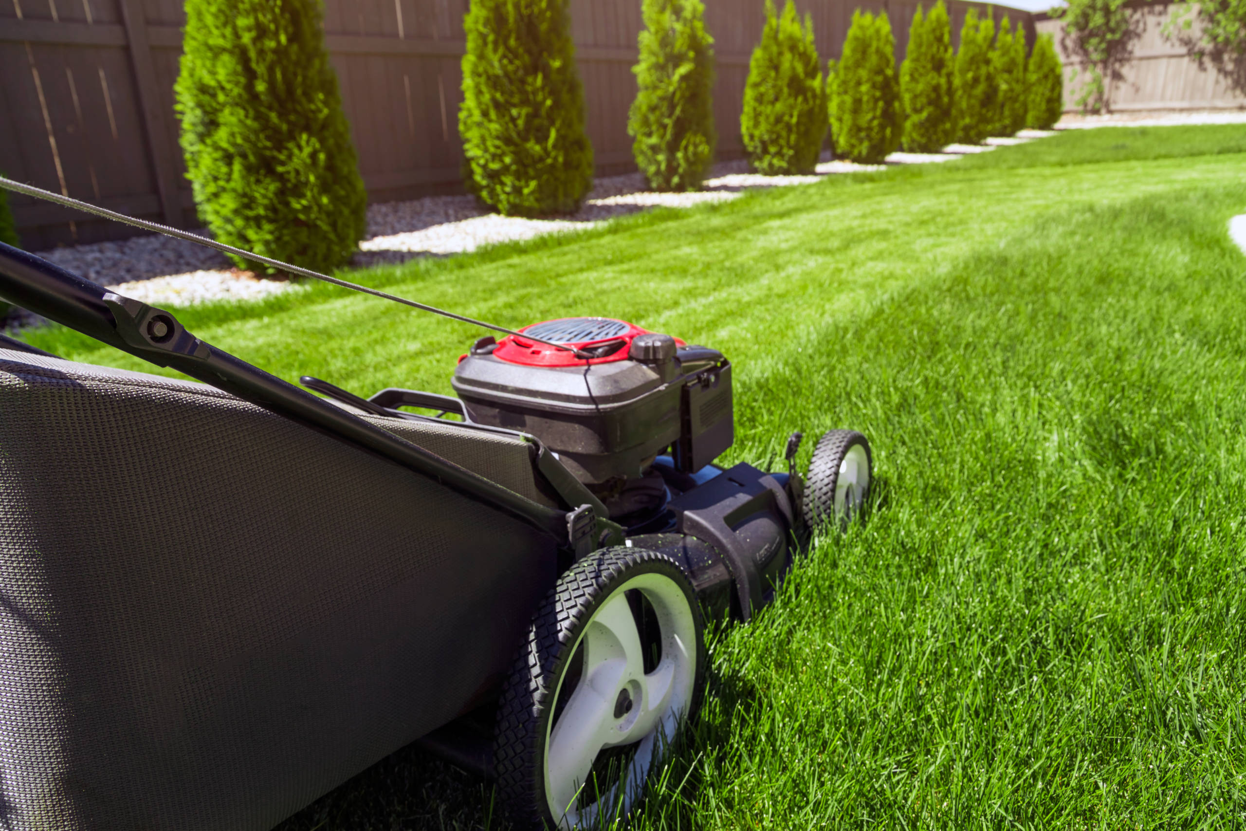 How Often Should I Be Mowing My Lawn?